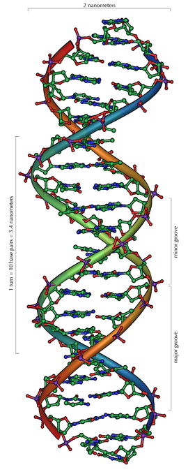270pxdna_overview